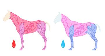 drawinghorse_3-5_blood
