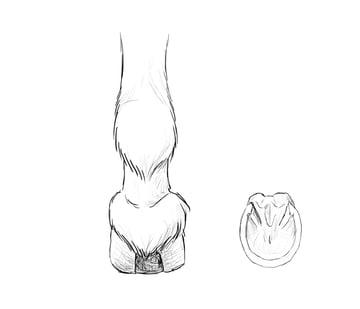 drawinghorse_4-11_hooves