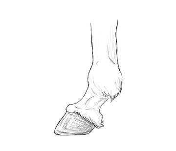 drawinghorse_4-4_hooves
