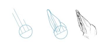 drawinghorse_7-2_ears_side