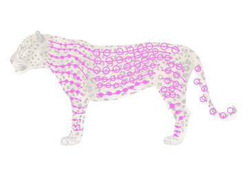 drawingbigcats_1-4_leopard_spots