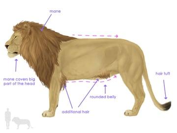 drawingbigcats_2-1_lion_silhouette