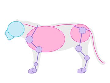 drawingbigcats_2-2_jaguar_simplified