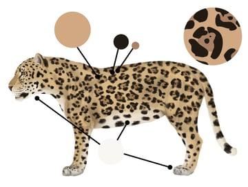 drawingbigcats_2-3_jaguar_colors