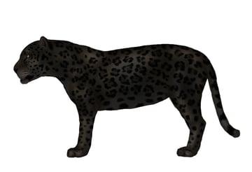 drawingbigcats_2-8_black_panther_jaguar