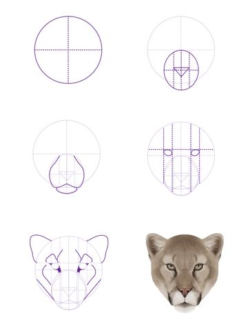 drawingbigcats_3-4_cougar_head_front