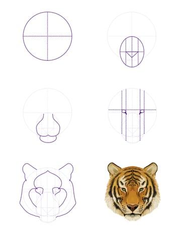 drawingbigcats_3-5_tiger_head_front