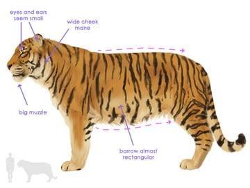 drawingbigcats_3-8_siberian_tiger_silhouette
