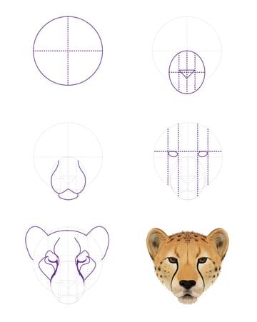 drawingbigcats_4-5_cheetah_head_front