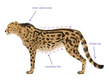 drawingbigcats_4-9_king_cheetah_silhouette