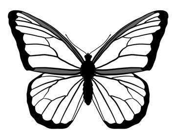 drawingbutterfly_4-3_monarch