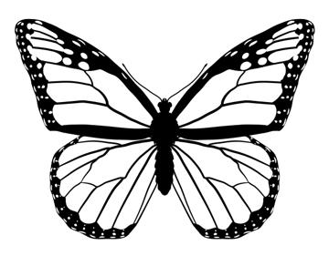 drawingbutterfly_4-5_monarch
