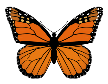 drawingbutterfly_4-6_monarch