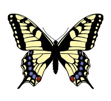 drawingbutterfly_6-5_swallowtail