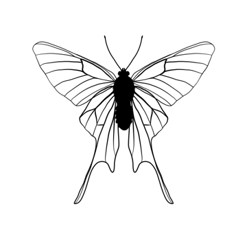 drawingbutterfly_7-1_chorinea_amazon