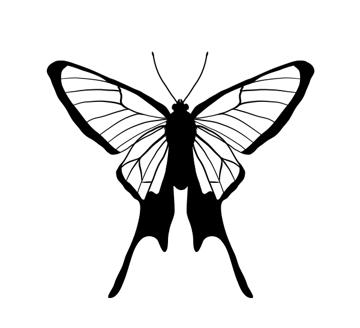 drawingbutterfly_7-2_chorinea_amazon