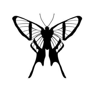 drawingbutterfly_7-3_chorinea_amazon