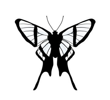 drawingbutterfly_7-4_chorinea_amazon