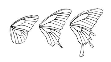 drawingbutterfly_8-2_design_shape