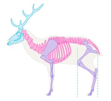 drawingdeer-1-1-skeleton