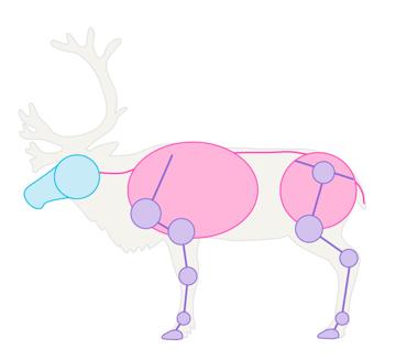 drawingdeer-1-3-reindeer-skeleton