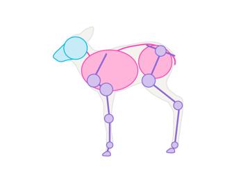 drawingdeer-1-8-fawn-skeleton