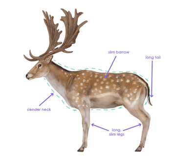drawingdeer-2-6-fallow-deer-silhouette
