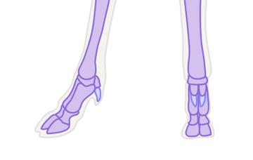 drawingdeer-3-1-deer-hoof-bones