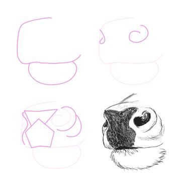drawingdeer-5-2-deer-nose