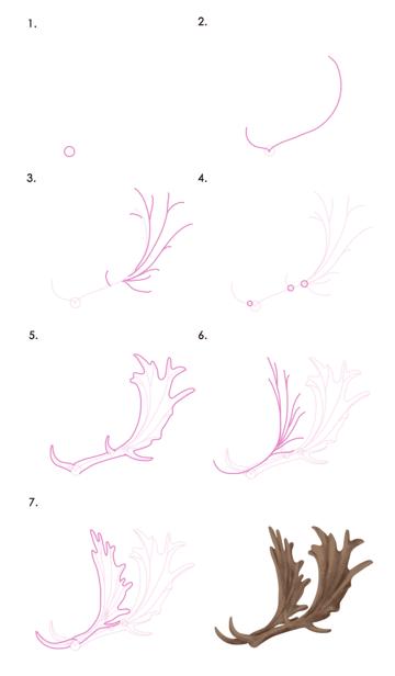 drawingdeer-7-4-fallow-deer-antlers