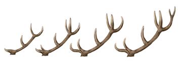 drawingdeer-7-7-antlers-growth