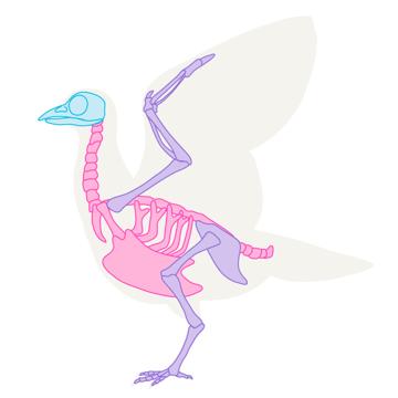 howtodrawbird-1-1-skeleton