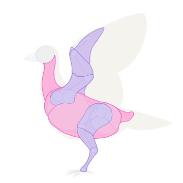 howtodrawbird-1-6-simplified-muscles