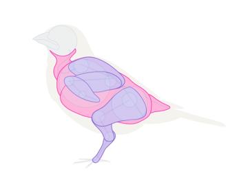 howtodrawbird-1-7-body-under-feathers