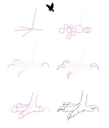 howtodrawbird-2-1-eagle-feet