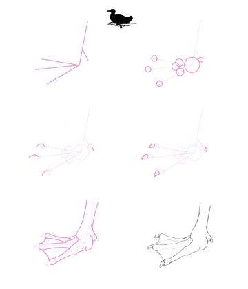 howtodrawbird-2-3-duck-webbed-feet