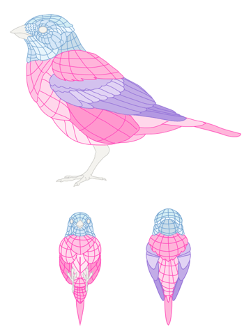 howtodrawbird-5-2-feathers