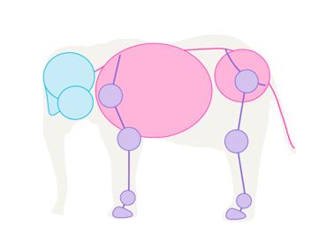 howtodrawelephants-1-1-skeleton-simplified