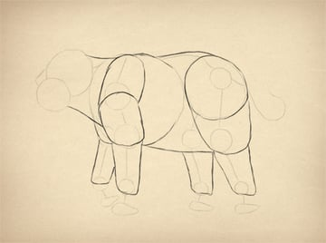 howtodrawelephants-1-4-muscles-done