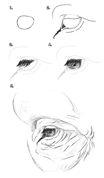 howtodrawelephants-3-1-elephant-eyes