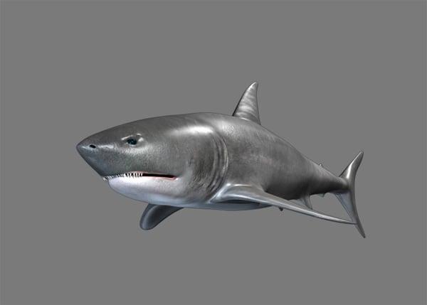 Shark_PT2_72
