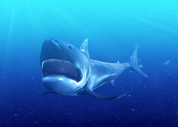 3dsMax_Shark_PT3_85b