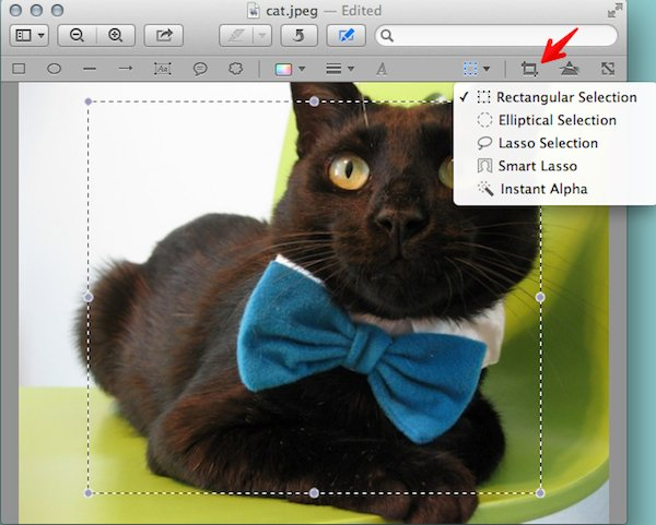 Use the Selection tool and the Crop tool to crop your image