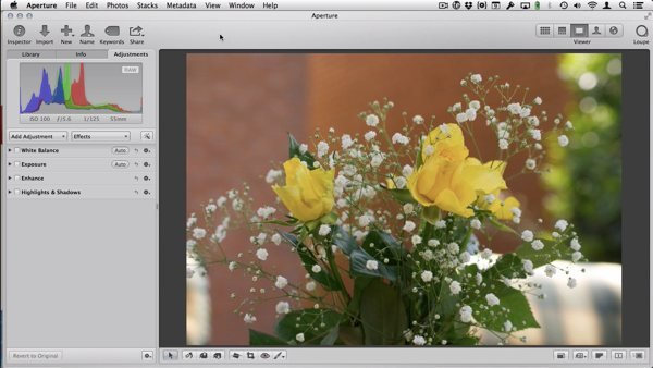Here is a photo that I've taken of some flowers that I'll be using.