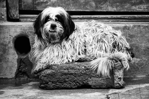 black and white photography plugins photoshop