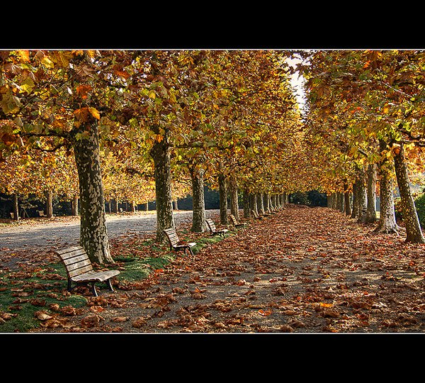 autumn photography examples