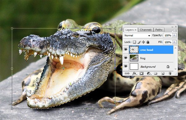 Resize the croc with the transform tool