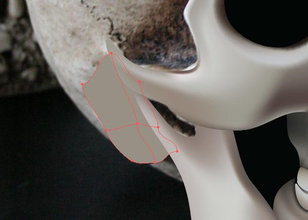 skull_10-1_braincase