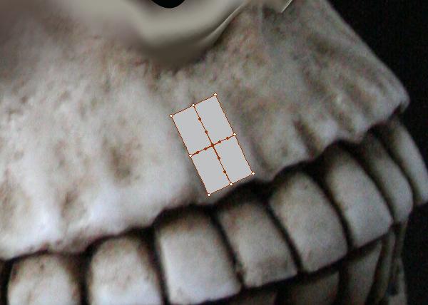 skull_7-1_upper_jaw