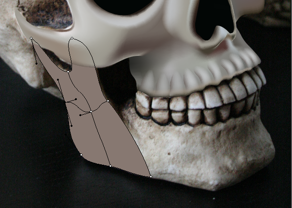 skull_8-2_lower_jaw